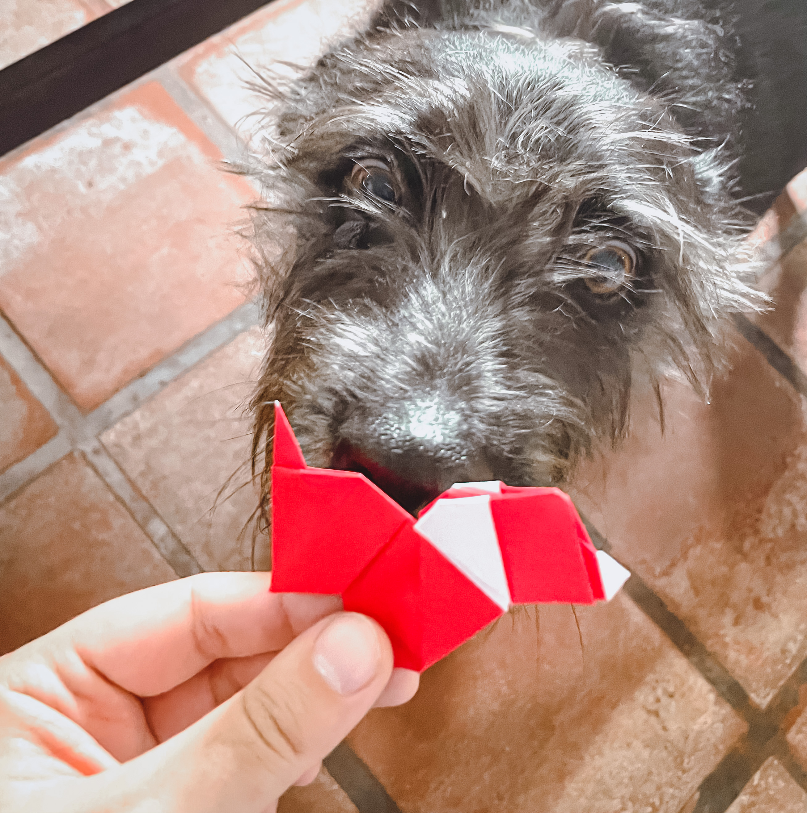 Dog and red origami